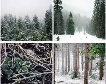 Winter Forest Photos - Forest Prints - Winter Print Set - Forest Photo Set - Set of 4 - Green White - Digital Photo Set - Digital Download