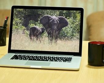 Elephants, South Africa - digital download