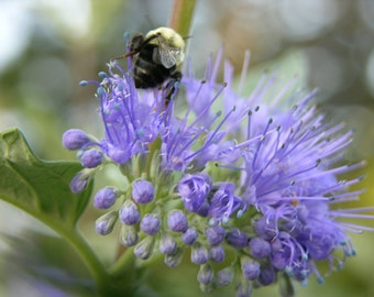 Blue Flower & Bee