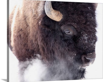 Do Not Approach, Canvas, buffalo, bison photo, wild animal, gift for him, wildlife, photo, photograph, wall art, man cave art, Yellowstone,