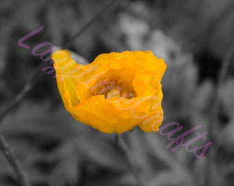 A4 print of Yellow Poppy