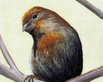"Finch ""Curious"" Giclee Print"
