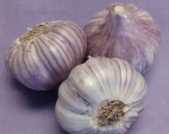 Hardneck Garlic- Leah *PRICE REDUCTION*