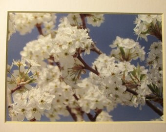 Spring blossoms, set of three