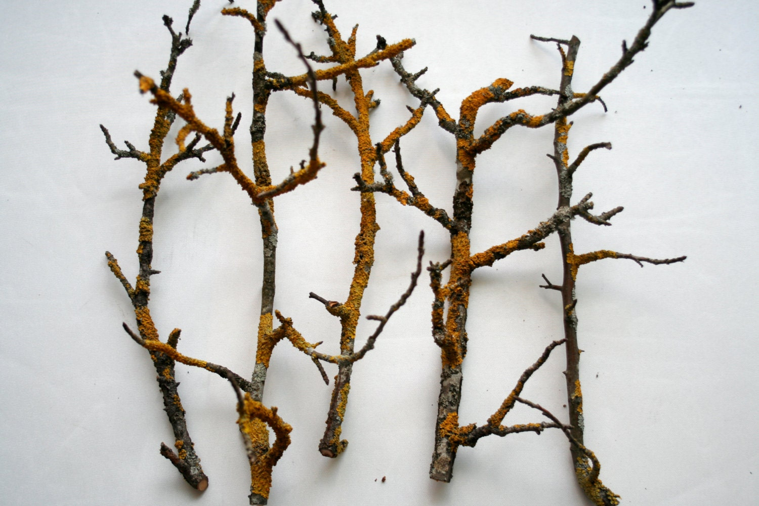 Decorative Apple Tree Branches With Yellow Moss Flower By