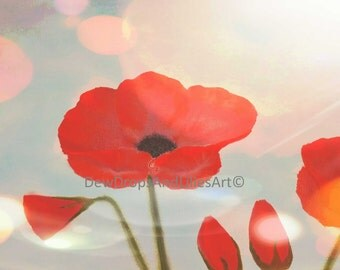Large poppies in the sunshine - Print of original oil colour painting