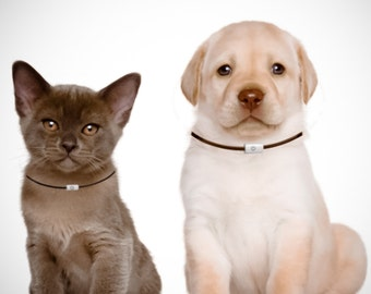 CHIC and COMFORTABLE Dog and Cat ID Collar