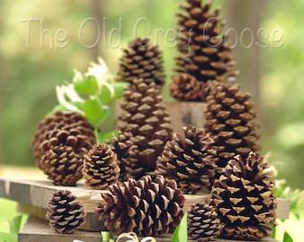 Pine Cones | Assorted | 50ct box