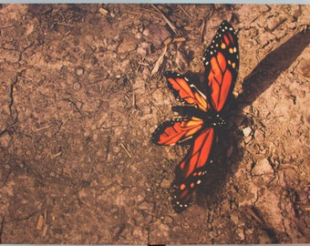 Canvas Print 18x24 - Butterfly