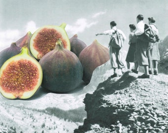 Fig Dreams Collage Print