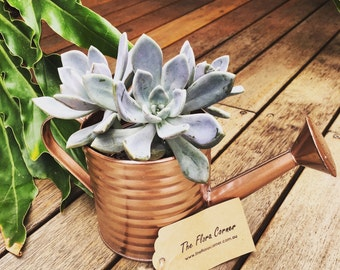 Succulents Watering Can