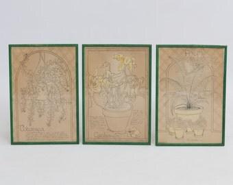 Signed Original Framed Botanical Prints - Set of Three