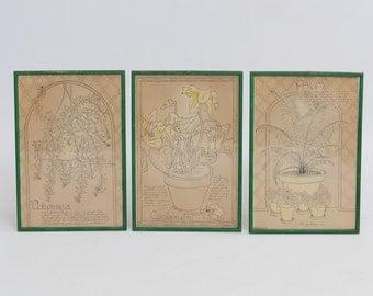 Vintage Botanical Sketches R. Jacque 1976 / Bohemian