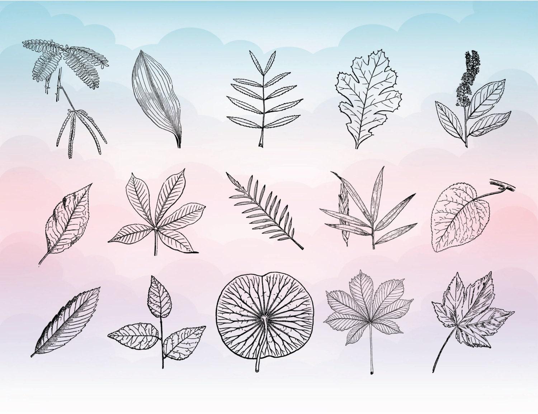 autumn leaves svg- leaf svg - autumn fall vector art