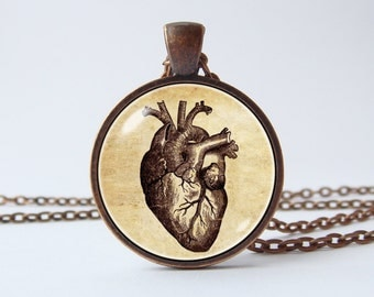 Human heart necklace Anatomical human heart pendant Heart jewelry Medical school Heart necklace Anatomical heart jewelry Biology gift