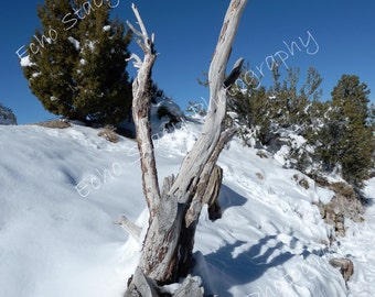 Mount Charleston Winter