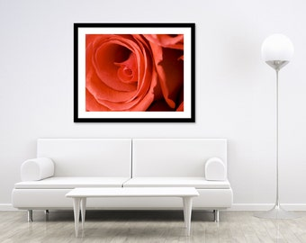 Red Rose Photography - Flower Photography Print - Floral Wall Art - Red Flower Photography - Fine Art Print - 11x14 Print - 20x24 print