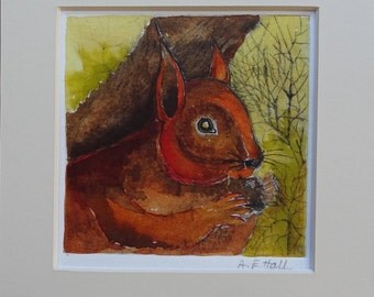 Red Squirrel - Original Etching with hand colouring