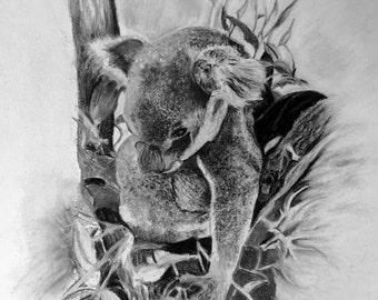Koala (Print's only)