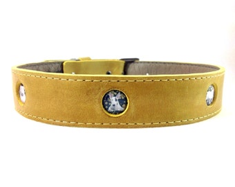 Bull Terrier yellow dog collar.
