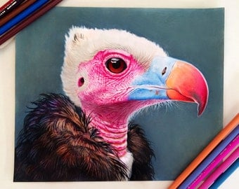 Mixed Media Vulture Drawing