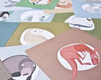 12 animal postcards  ( polar, Australian and European ), fox hare owl seal walrus polar bear penguin koala platypus, illustration, print
