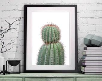 Cactus Art, Succulent Art, Cactus Print, Wall Art, Desert Wall Art, Prints, Botanical Art, Cactus Poster, Cactus Photography, Cactus, 101