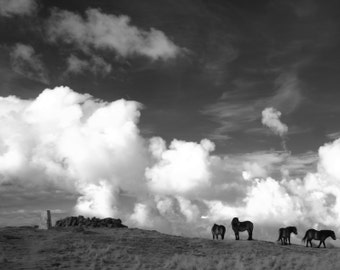 Infrared Photography Ponies, Traprain Law and other locations, East Lothain, Scotalnd, Infrared Photography Scotland