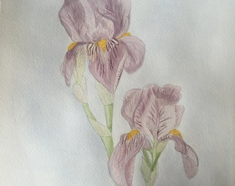 Iris's-Watercolor