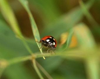 G48 - Ladybug grass 4