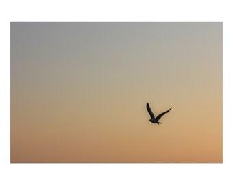 The  Seeker Photograph, Bird, sky