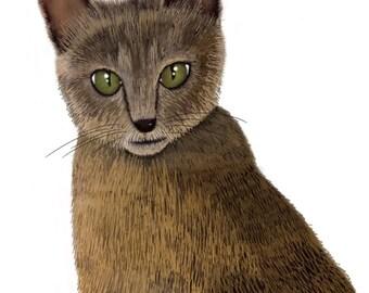 Greetings card - Kittie Kat