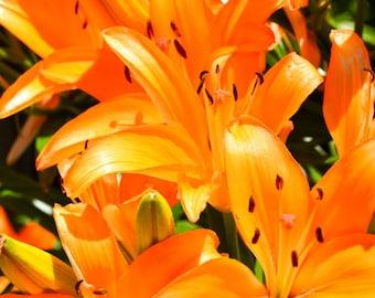 Acrylic Block - Orange Flowers - Flowers - Photograph