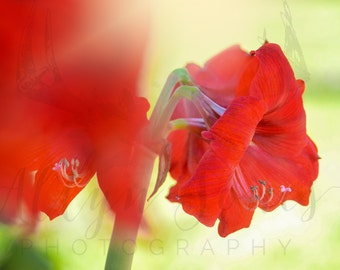 Floral Photography- red and green floral botanical fine art print
