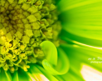 Green Macro Flower Nature Photography Fine Art Wall Print