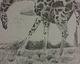 Giraffe at Sunset Print