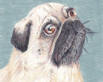 Original Pug portrait