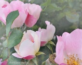 Pink roses photograph, pastel floral photography, nature wall art for her, girls dorm apartment decor, Mother's Day gift feminine art