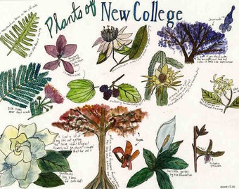 plants of new college