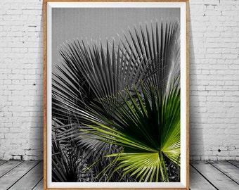 Tropical Leaf Print, Printable Plant Photo, Tropical Plant Print, Wall Art Decor, Palm Leaf, Black and White Photo, Palm Leaf, Beach Plant