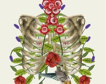 Rib cage Science Illustration