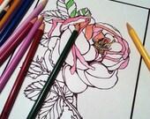 Color page - Antique Roses 1