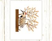 Northern Flicker Print -- bird art -- bird art 52 birds stephanie fizer coleman illustration woodpecker