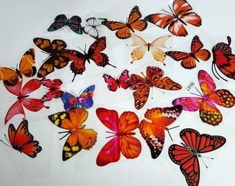 E11 ORANGE UNCUT Butterfly pack - 20 per pack - scrapbooking, card making, crafts