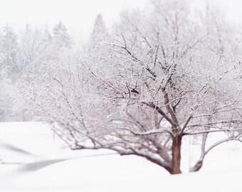 Winter Landscape Picture Tree - Scandinavian Landscape Print - Contemporary Winter Picture - Nordic Tree Art - White Brown Living Room Decor