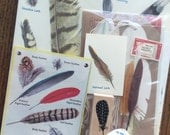 Bird Feathers Vintage Ornithologist Collage, Scrapbook and Planner Kit Number 2106