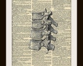 Art Print Anatomy Spine 8x10 Dictionary Gold Gilded Vintage Page
