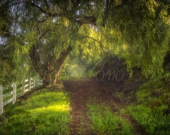 Weeping tree arch and woodland pathway digital background | digital backdrop