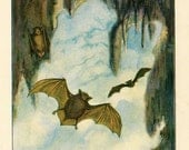 PRINT SALE 20% OFF Vintage 1926 North American Animals  Original Bookplate Illustration, Print, the Brown Bat,  Cave Interior Scene