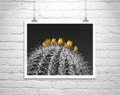 Cactus, Fine Art Photography, Black and White, Cacti, Desert Art, Wall Art, Arizona, Sonoran Desert, Tucson, Orange, Black, MurrayBolesta